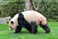 2021年3月白浜パンダ見隊その3 - ハープの徒然草