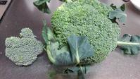 ブロッコリー収穫 - ウィズコロナのうちの庭の備忘録~Green's Garden~