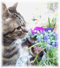 Happy Caturday♪2019年3月の麗 - おだやかに たのしく Que Sera Sera