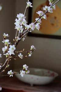 桜を愉しむ - 暮らしを紡ぐ2