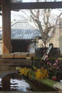 3月の境内(3) - 日本写真かるた協会~写真が好きなオッサンのブログ~