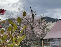5日目俳句の基本発想 - 花咲く俳句日誌