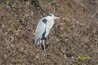 2021年 1/9 鳥撮り - ブログ和歌山の里山便り2