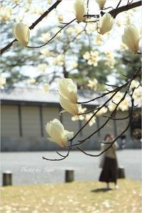 白い花たち。 - advance
