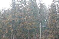 【よりみち編】雨の朝景色 - 長岡・夢いっぱい公園