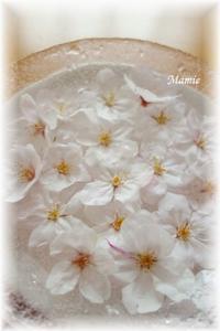 さくらの花がおちてたよ~ - おだやかに たのしく Que Sera Sera
