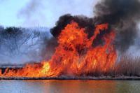 多々良沼ヨシ焼き(3月18日)・・・エピソード#2踊る炎の大舞台! - 『私のデジタル写真眼』