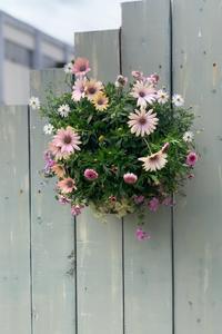 春のメンテナンス - reco2の花暮らし