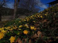 早春の植物 - 飛騨山脈の自然