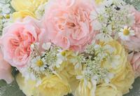 4月から始まります講座のお知らせ - バラとハーブのある暮らし Salon de Roses