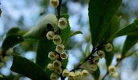 春分雀始巣その3 - 紀州里山の蝶たち
