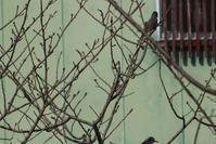 20210320 【自然】鳥 - 杉本敏宏のつれづれなるままに
