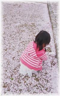 桜の思い出写真 - おだやかに たのしく Que Sera Sera