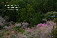 橋本市上田のモクレン、西吉野の春景色他 - 日本全国くるま旅