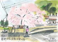 いよいよ、桜の出番 - デジの目