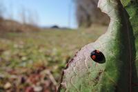 春来たる - 蝶の縁