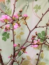 桜開花と、ボス杏樹 - わんわん・パラダイス