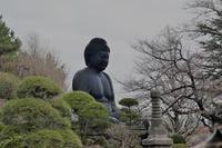清水山の森のカタクリ♪ - ヒデッチのフォトブログ ☆彡
