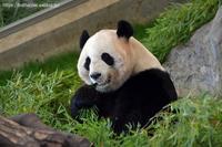 2021年3月白浜パンダ見隊その5 - ハープの徒然草