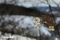 「越冬」 - 藍の郷
