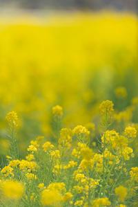 黄の妖精 - 気ままにお散歩