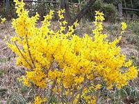 春の花いろいろその3 - しらこばとWeblog