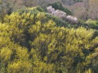 春色 3大阪府 - ty4834 四季の写真Ⅱ