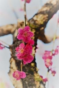 春の花 - *la nature*