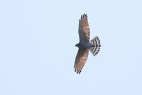 春期タカの渡り Ep2 - 野鳥の視線