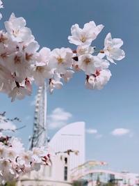 春。。。sionが撮影〜♪ - umi no oto ♪