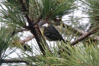 キバラガラ - Bird Healing