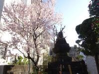 彼岸桜が見頃に - しゅんこう日記