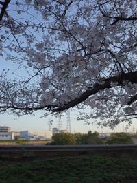 近所の桜(2021年版)その8 - 魔王の独り言 の続編