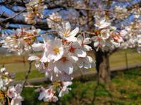 新しい春の訪れを感じて - PETIT POINT CINQ のプチコラム