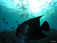 榊原康寛が取り組む海洋エネルギーシステムの開発 - 榊原康寛の世界ブルーエコノミー探訪記