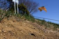 小畔川便り(電車と蝶、交尾個体と電車:2021/3/10,14) - 小畔川日記