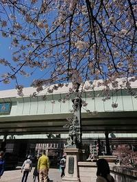 桜撮影こっそり真似ても失敗だわ - jujuの日々