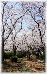桜林のもとで・・・ - おだやかに たのしく Que Sera Sera
