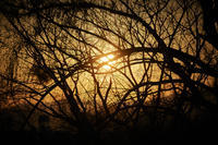 evenung(4cut) 奈良公園 -     ~風に乗って~    Present