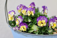 暖かくなって雑草が - my small garden~sugar plum~