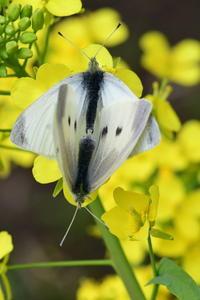 蝶たちの季節♪ - *la nature*