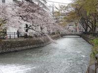 今日の広瀬川彼岸も過ぎて春の色 - しゅんこう日記