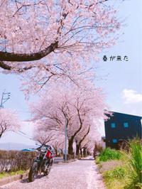 私的ブログ…春が来た!…編^_^。 - 阿蘇西原村カレー専門店 chang- PLANT ~style zero~