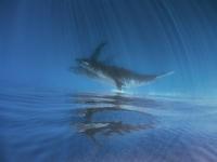 鯨の居る日常 - COLORCODE
