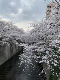 目黒川は桜も人出も - 毎日にこにこハッピーデイ