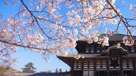 4月4日出展者一覧 - 駅マエクラフト 奈良ノ空カラ