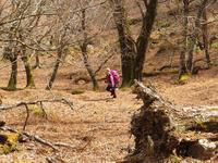 お山で生命の神秘との出会い【奈良県内】3/20 - 静かなお山の森歩き~♪