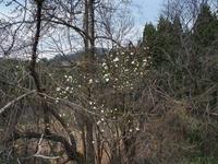 里山歩き - 飛騨山脈の自然