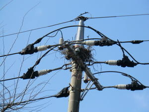電柱上に作られたカラスの巣  No744 -