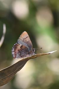 コツバメ・・・今年初 - 続・蝶と自然の物語